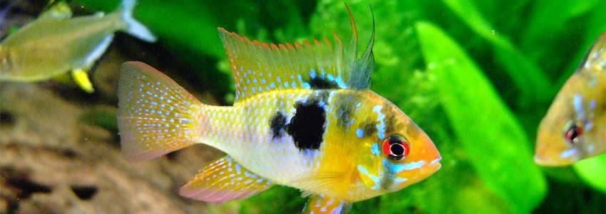 Large choix d'Aquariums disponibles chez Aquario&Co !
