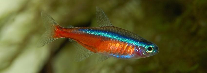 Sables pour aquarium disponibles chez Aquario&Co !