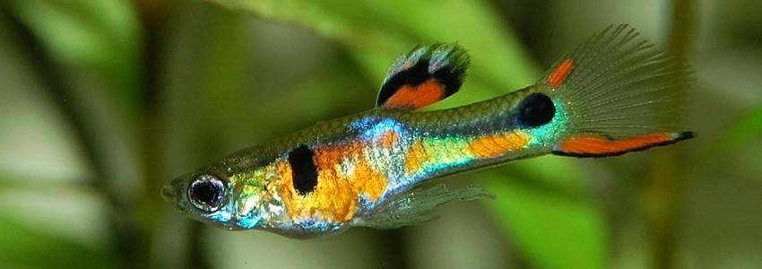 Décorations pour aquarium disponibles chez Aquario&Co !