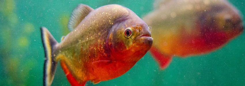 Chauffage pour aquarium disponibles chez Aquario&Co !